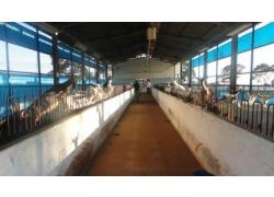 VIAGEM ANUAL 2012 CONTROLE LEITEIRO OFICIAL